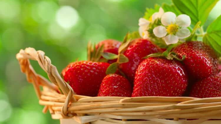 Spanish Strawberries